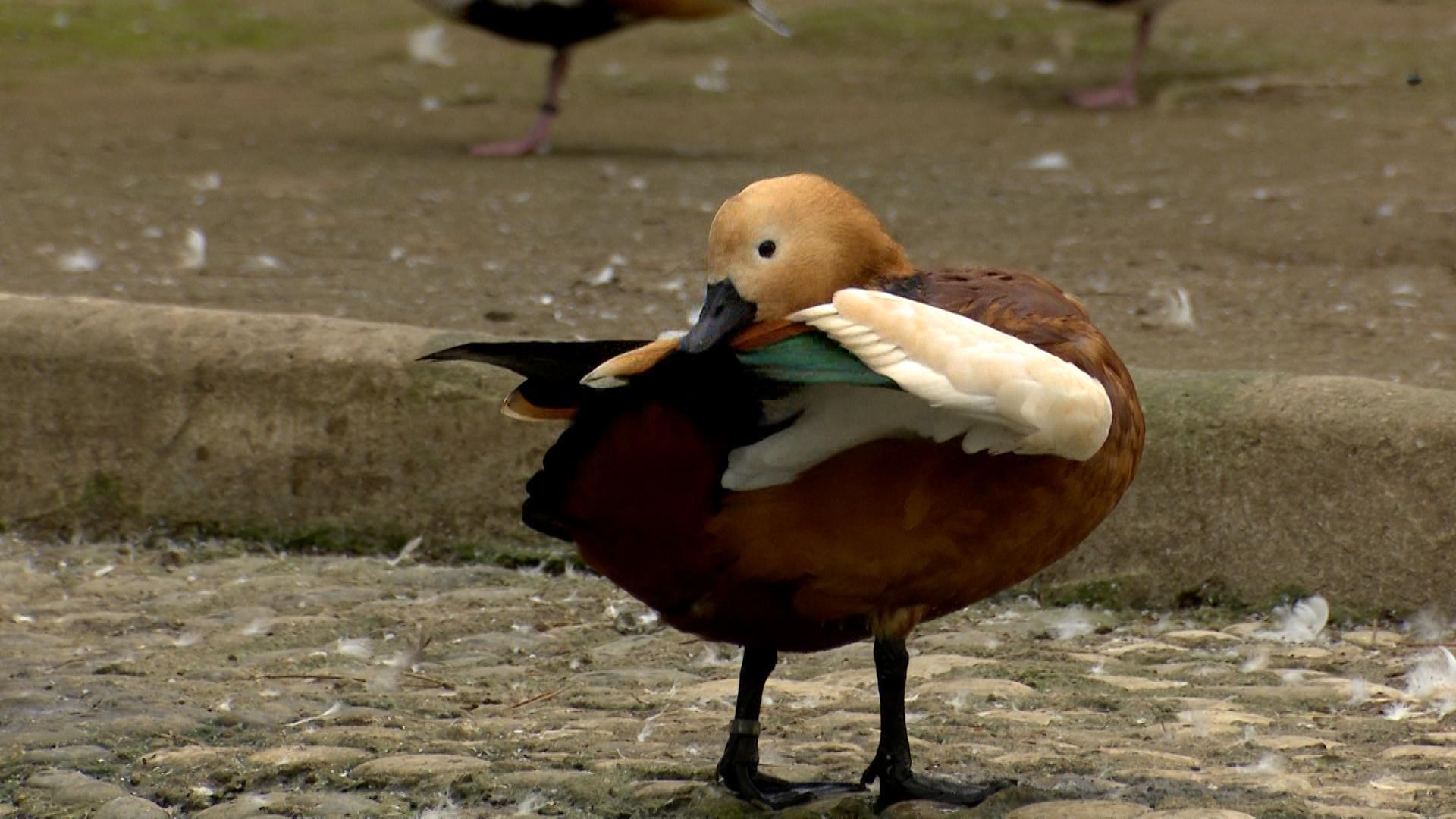 ეგზოტიკური და იშვიათი სახეობის ფრინველებში 25 ათასი ლარი დაიხარჯა