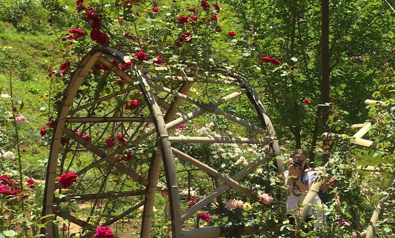 Roses will be exhibited in Batumi Botanical Garden on Independence Day