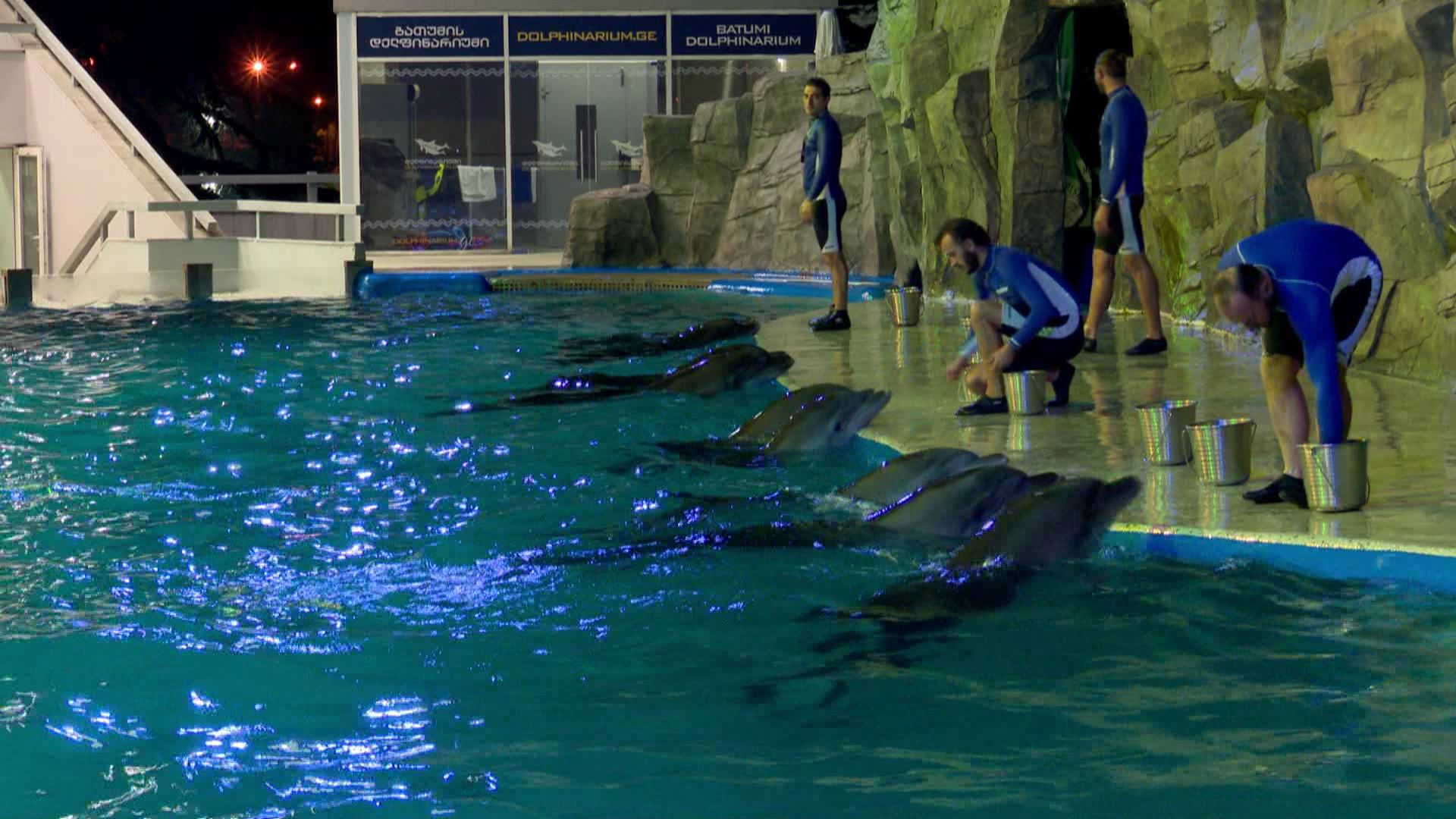 დელფინების შოუ