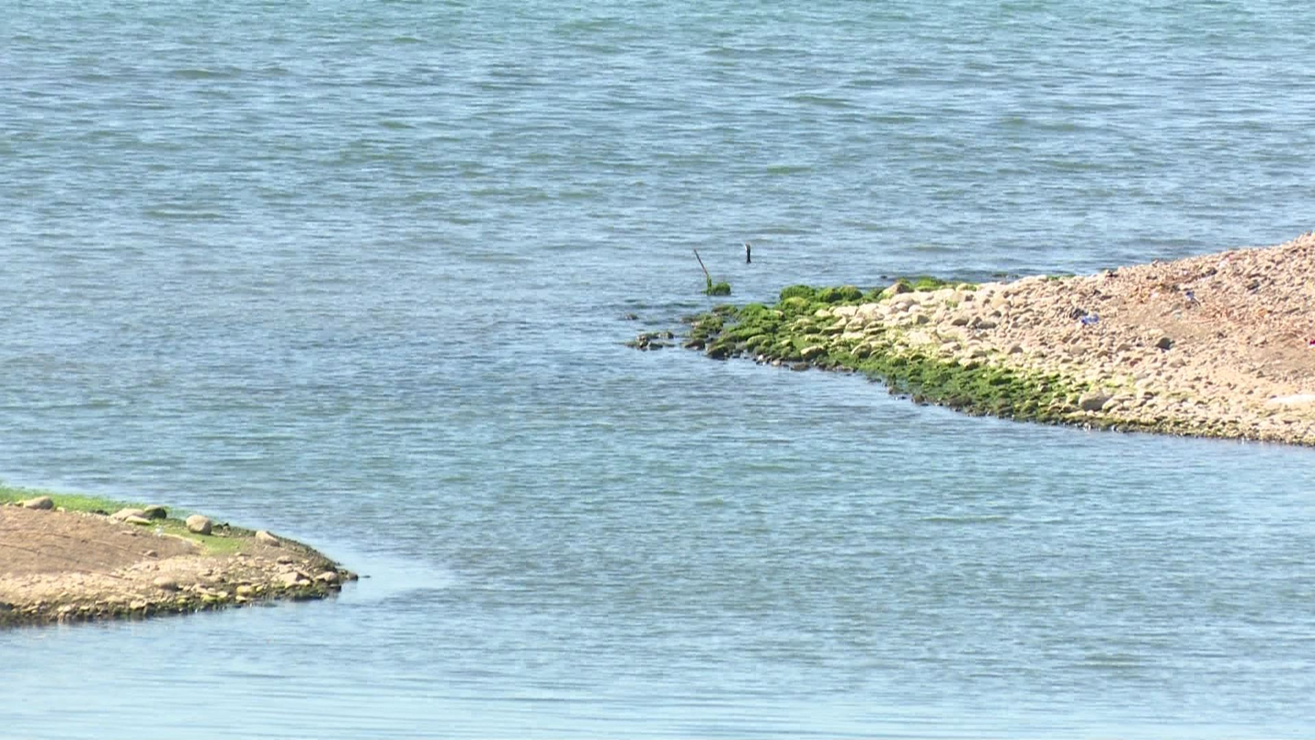 ზღვის წყლის ხარისხი დამაკმაყოფილებელია