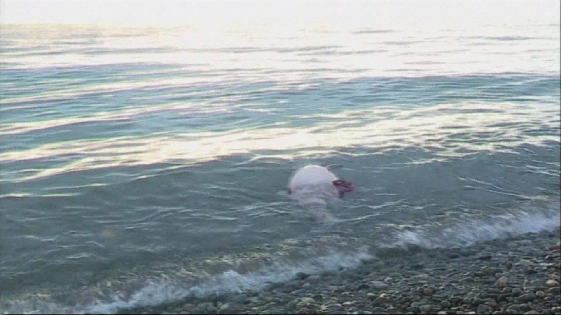 გაფრთხილება: ''მოერიდეთ ზღვიდან გამორიყულ დელფინებთან კონტაქტს''