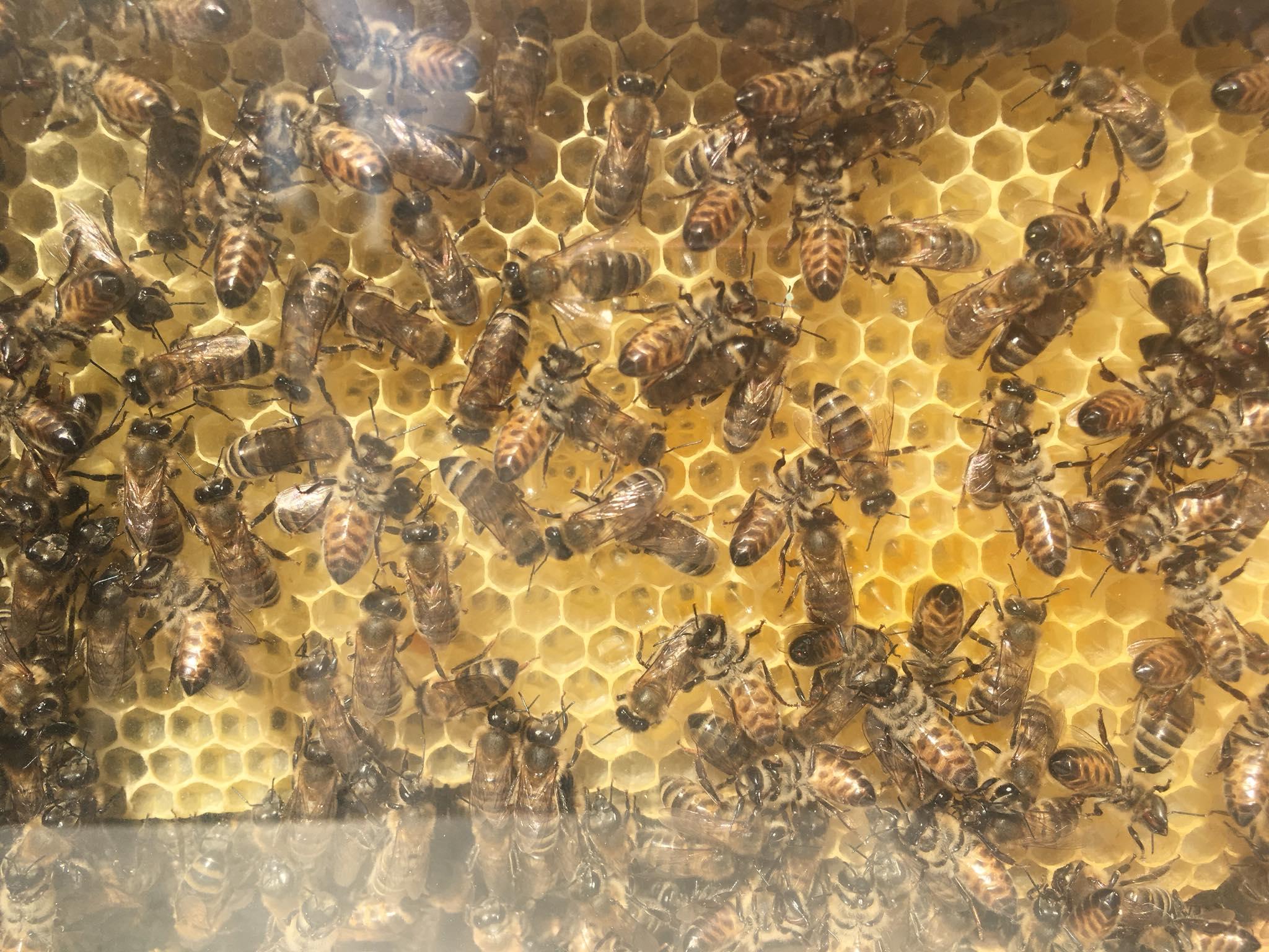 თაფლის ფესტივალი ბათუმში