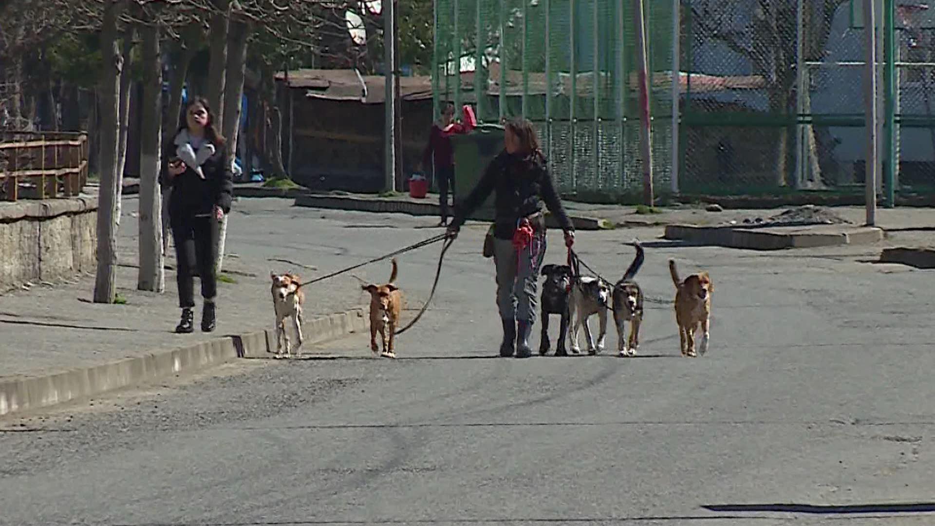 შვეიცარიელმა რეპორტიორმა ქედაში უპატრონო ძაღლები შეიფარა