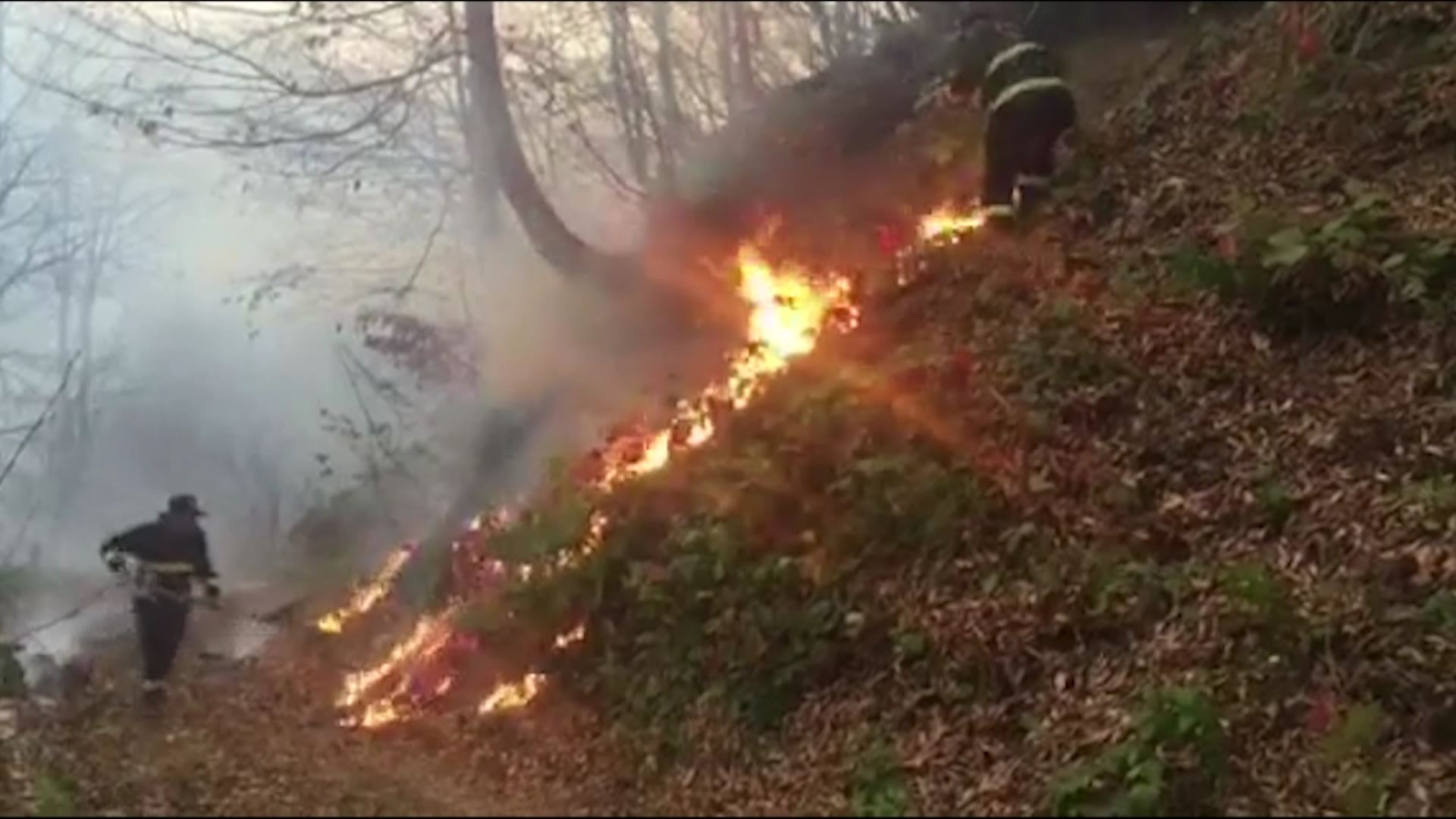 Fire in the forest in Keda