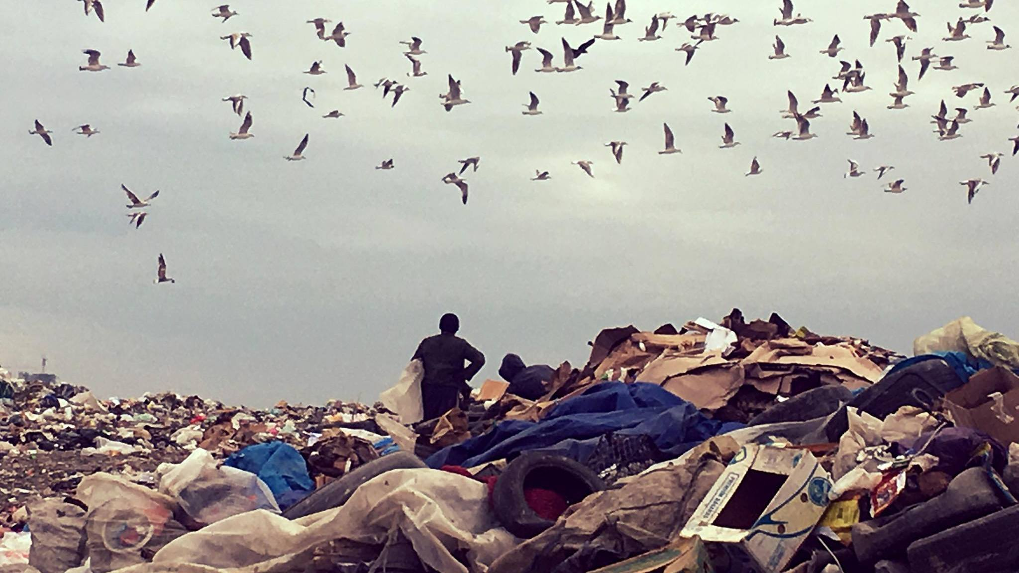 Life in the landfill- photocovering