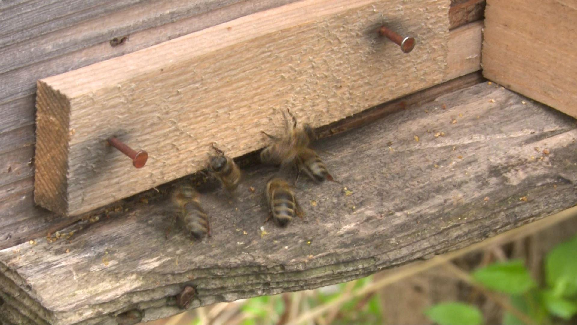 რას უკავშირებენ მეფუტკრეები ზარალს?