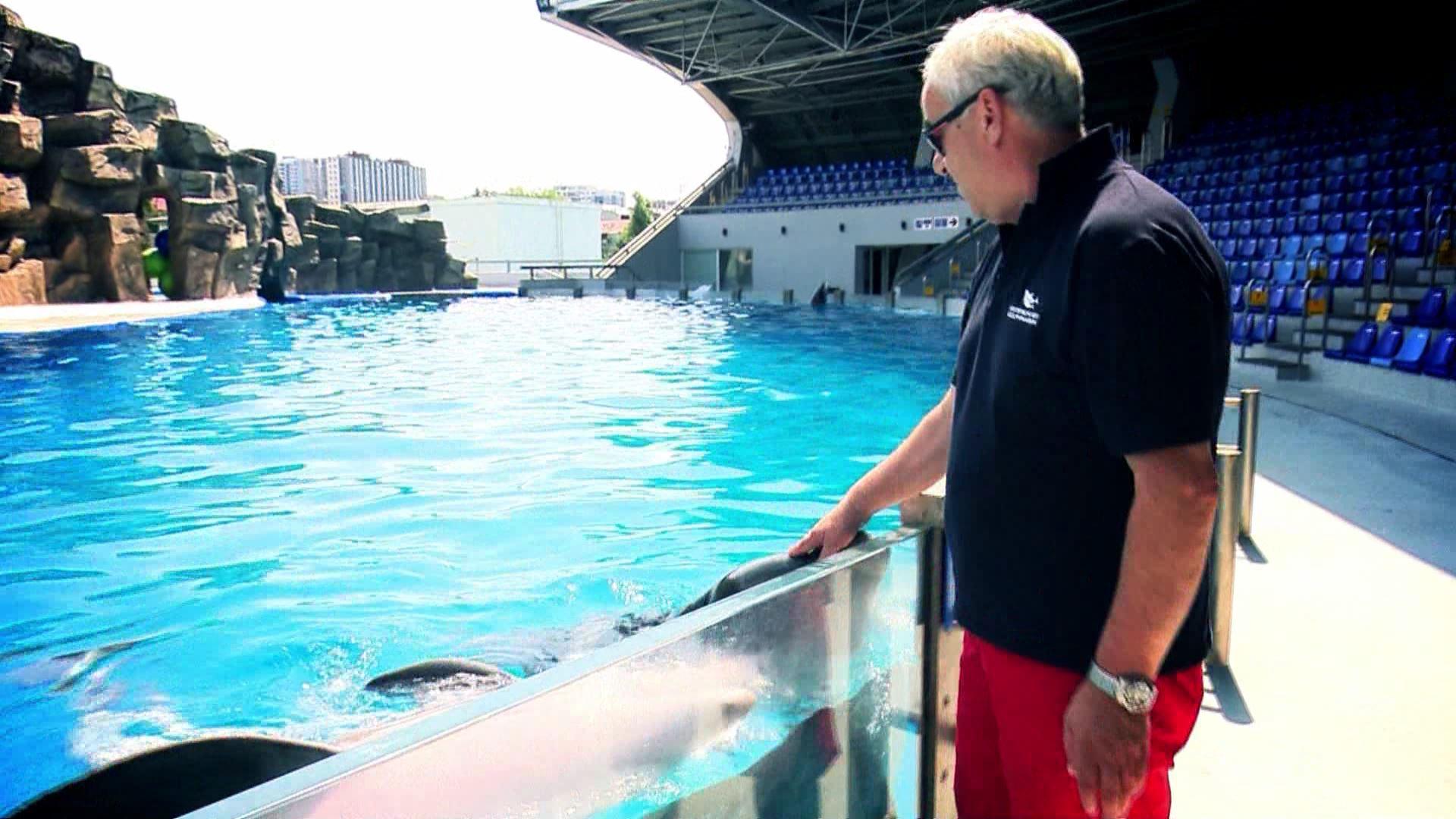 • დელფინების პარტნიორი