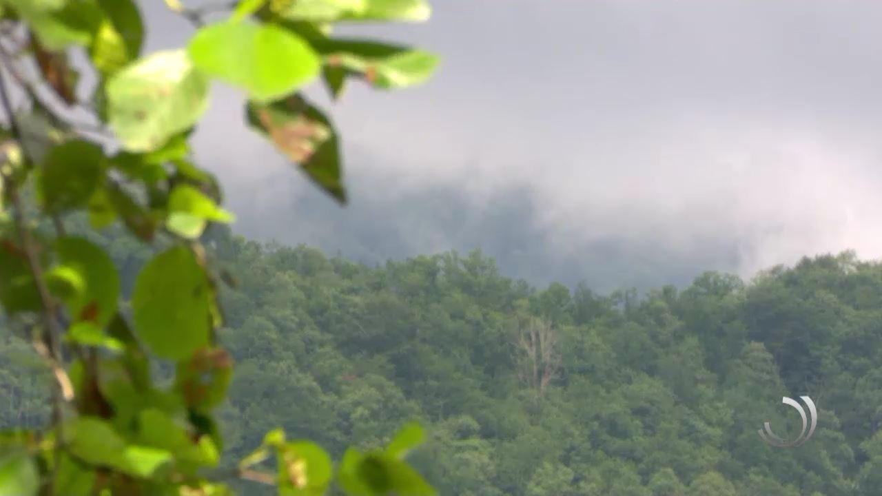 ტყის დამაზიანებლები