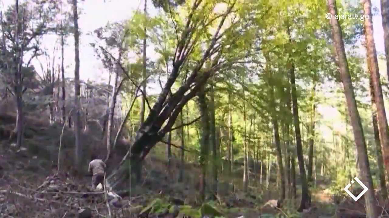 დაზიანებული ხეების ჩანაცვლება