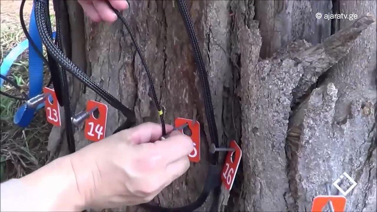 ხეების ინვენტარიზაცია