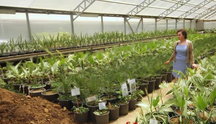ბათუმის ბოტანიკური ბაღის სათბურები
