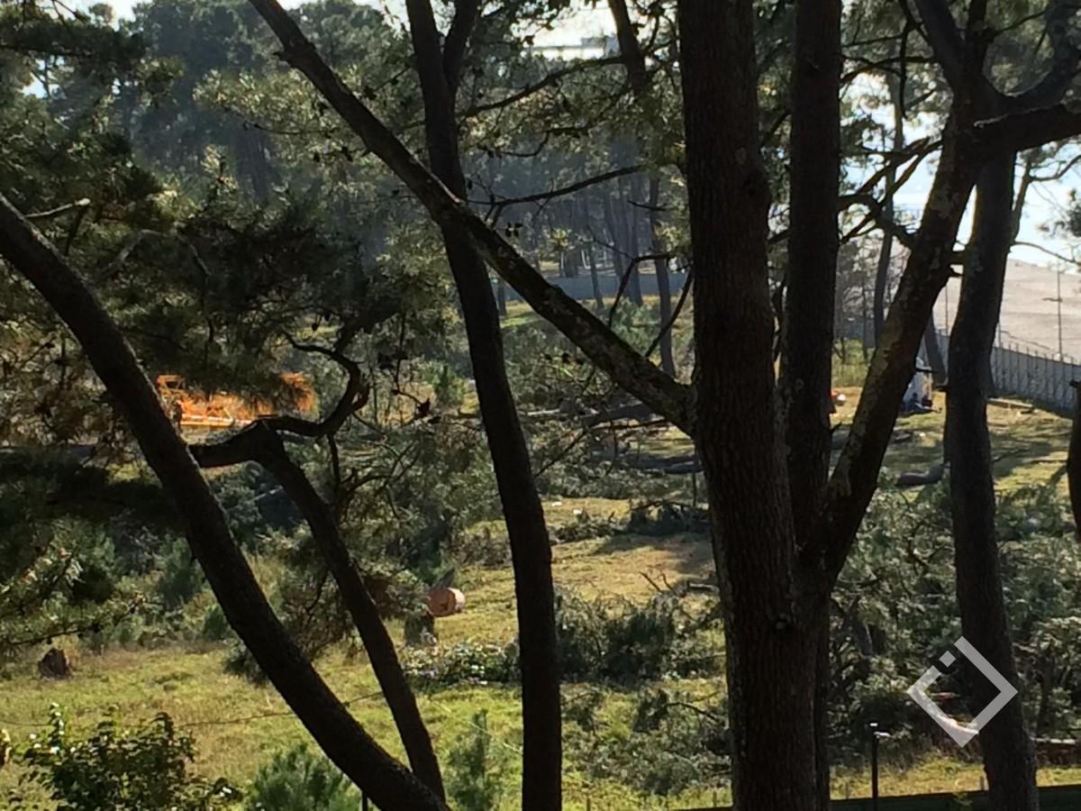 """""""ალიანს ჯგუფი"""" ქობულეთში ფიჭვის უნიკალური ჯიშის ხეებს ჭრის  - ტერიტორიაზე სასტუმრო შენდება"""