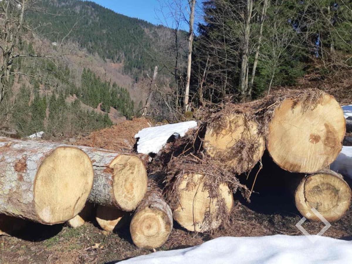 მარტში ხე-ტყის უკანონო მოპოვების 232 ფაქტი გამოვლინდა - გარემო
